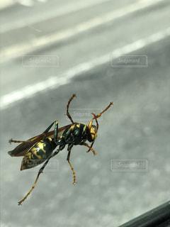 地上で昆虫の写真・画像素材[1509787]