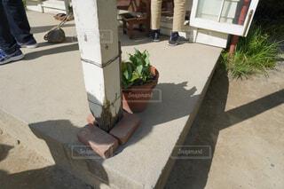 サツキとメイの家 ボロボロの柱の写真・画像素材[2448253]