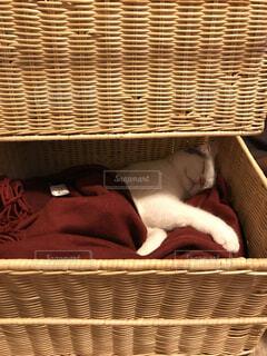 かごの中で眠っている猫の写真・画像素材[1509713]