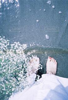 花の写真・画像素材[1510065]