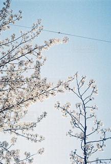 木の上に座っている鳥の群れの写真・画像素材[1510096]