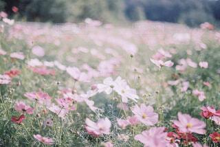 植物にピンクの花の写真・画像素材[1610859]