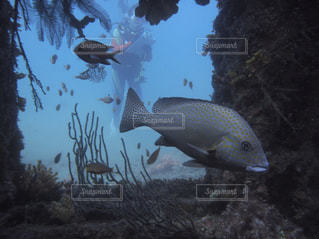 水中を泳ぐ魚たちの写真・画像素材[1513352]
