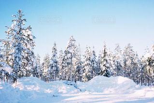 冬景色の写真・画像素材[1510747]