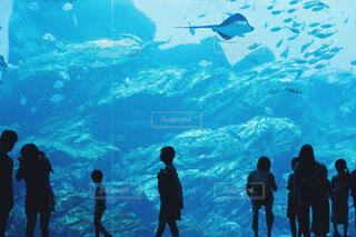 水族館シルエットの写真・画像素材[1656478]