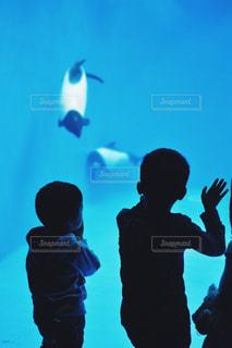 水族館でのぞきこむ子供の写真・画像素材[1656479]