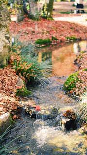 池に流れるもみじの写真・画像素材[1656502]