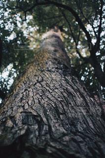 樹木の写真・画像素材[1656511]