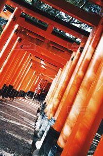 伏見稲荷神社の写真・画像素材[1677056]