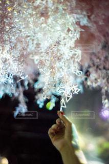 桜をモチーフにしたアートの写真・画像素材[1790329]