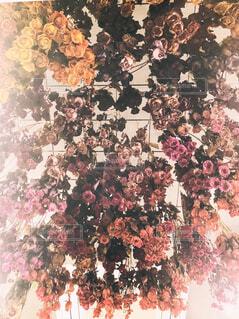 ぶら下がったバラのドライフラワーの写真・画像素材[1790335]