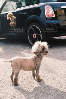 犬とドライブの写真・画像素材[1842322]
