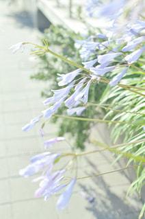 近くの花のアップの写真・画像素材[1842548]
