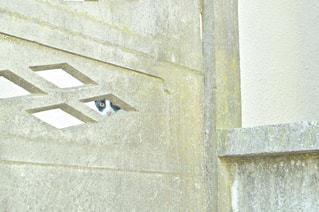 のぞいてる猫の写真・画像素材[1842549]