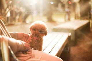 愛犬の写真・画像素材[1859617]