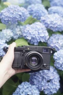 あじさいに埋もれたカメラの写真・画像素材[1859634]
