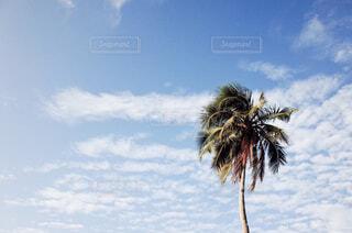 ヤシの木とビーチの写真・画像素材[1859640]