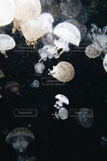 クラゲのアップの写真・画像素材[2471010]