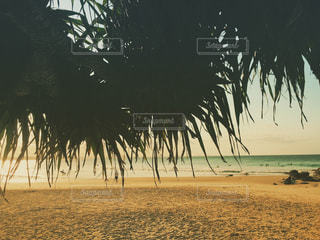ヤシの木とビーチの写真・画像素材[1523693]