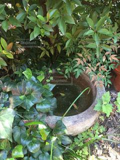 庭の緑の植物と水をはった臼。の写真・画像素材[1512023]