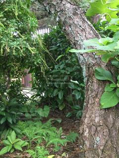 庭の木がしげる。の写真・画像素材[1513335]