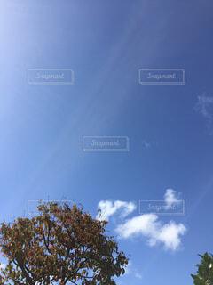 青い空と光。の写真・画像素材[1516061]