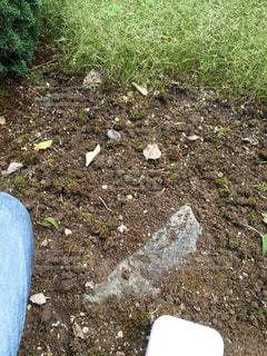 草とりの途中です。の写真・画像素材[1518288]