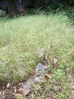 庭が草ボーボーなので、これから草とり。の写真・画像素材[1518292]