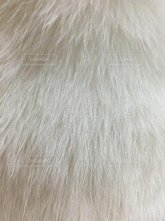 ネコの背中のアップ。の写真・画像素材[1518547]