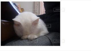 ごめん寝ネコ。の写真・画像素材[1526798]
