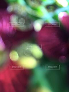 クリスマスの雰囲気に。の写真・画像素材[1533849]
