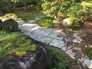 秋の朝の庭。の写真・画像素材[1619712]