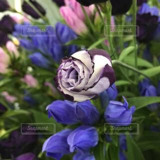 花の写真・画像素材[1512259]