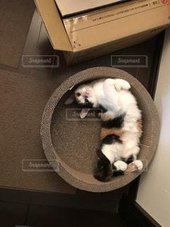 猫 爪とぎしなよの写真・画像素材[1513099]