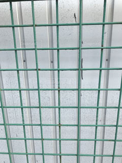 ガラスのドアの写真・画像素材[1557598]