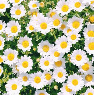 花のクローズアップの写真・画像素材[2227790]