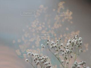 花のアップ写真。の写真・画像素材[2228516]