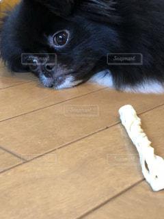 床に横になっている黒犬の写真・画像素材[1520446]