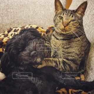 犬と猫の写真・画像素材[1515999]