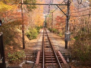 紅葉と線路の写真・画像素材[1513772]