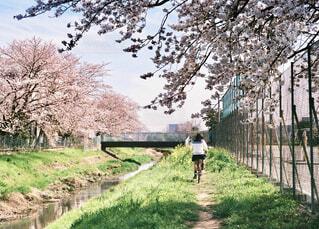 春の写真・画像素材[1514540]