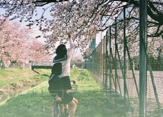 春と女子高生の写真・画像素材[1595674]