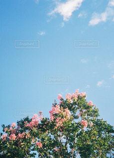 青空と淡いピンクの写真・画像素材[1595725]