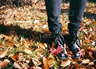 秋の写真・画像素材[1595781]