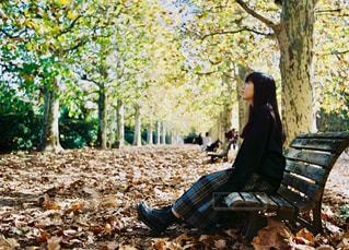 秋の公園の写真・画像素材[1618416]