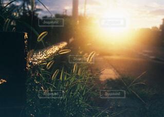 背景の夕日と花瓶の写真・画像素材[1749832]