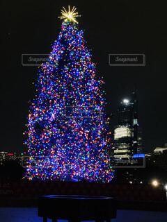 ライトアップされたツリーの写真・画像素材[1522452]