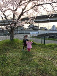 夕日と桜と姉妹の写真・画像素材[2170168]