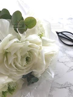 近くの花のアップの写真・画像素材[1515829]