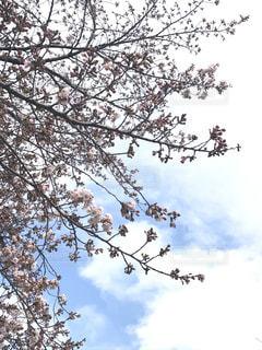 春の写真・画像素材[1516971]
